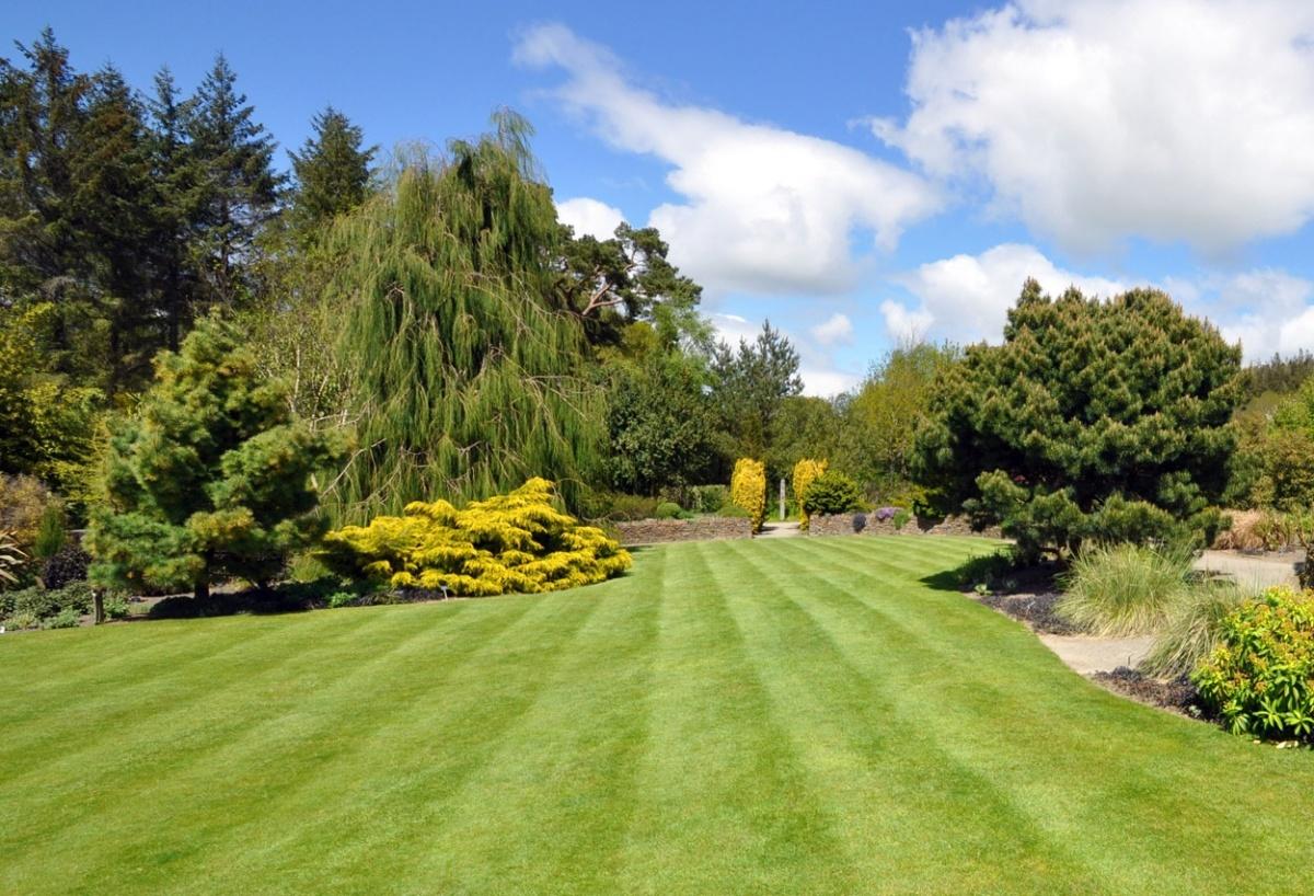 Estate Management Service. Lawn maintenance 3